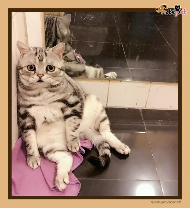 세상에서 제일 억울한 고양이 '루후'