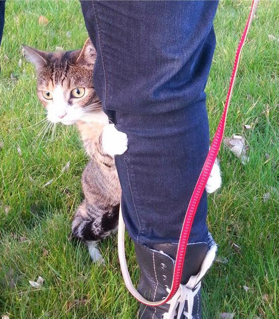 처음으로 집 밖을 나간 고양이의 반응