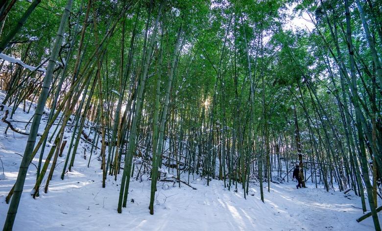도화지 위에 그려진 대나무숲길, 걸어