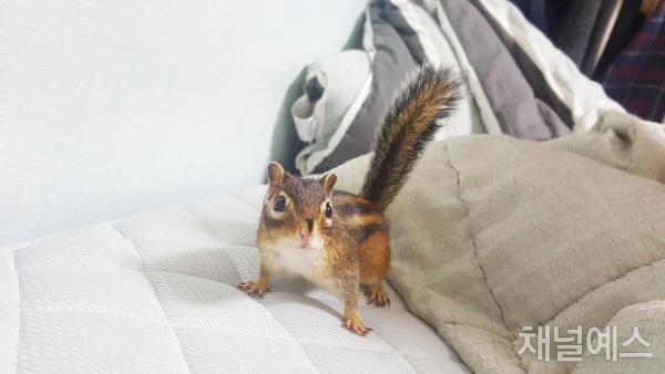 다람쥐 우디, 사람과 살아주기 참 힘