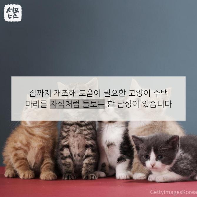 고양이 300마리와 함께 사는 남자