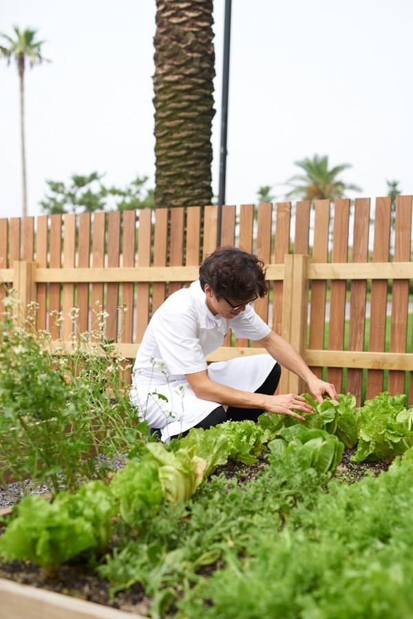 텃밭에서 농작물을 돌보고 있는 김영원 셰프 [사진=제주 해비치 호텔 앤드 리조트 제공]