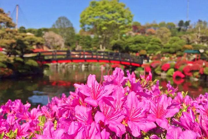 올해 당일치기 봄나들이는 여기로!