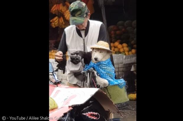 강아지 비 맞지 말라고... 모자에
