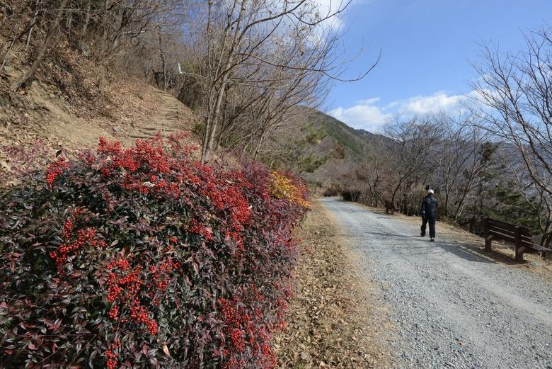 봄바람 타고 걷는 길!
