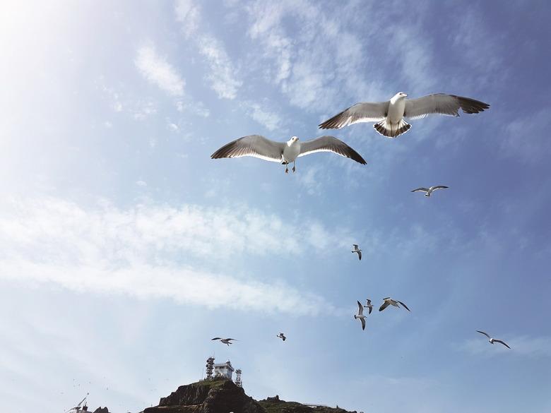 봄을 품은 섬