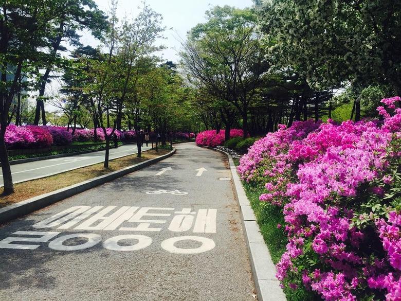 서울 봄 산책 가볼 만한 곳