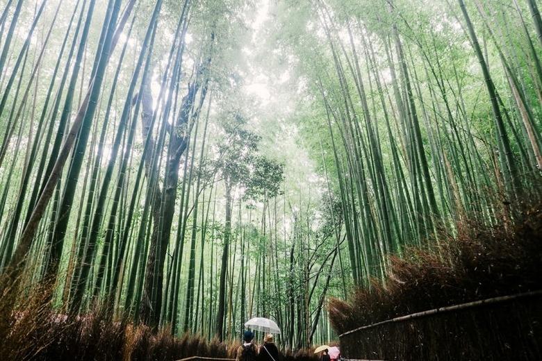 오사카 여행 근교로 떠나자
