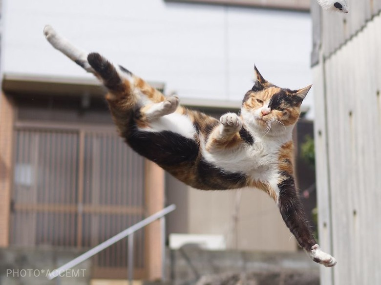 휘리릭- 아뵤! 무술하는 고양이 순간