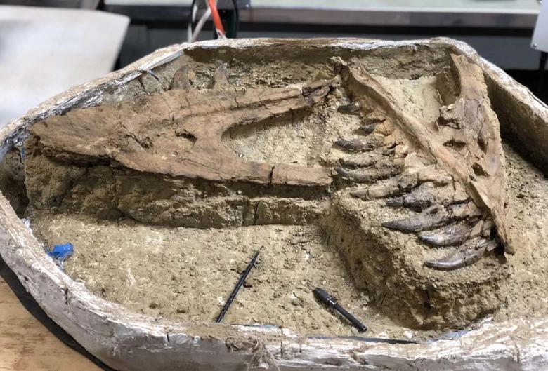 새끼 티라노사우루스 화석 발견 - 성