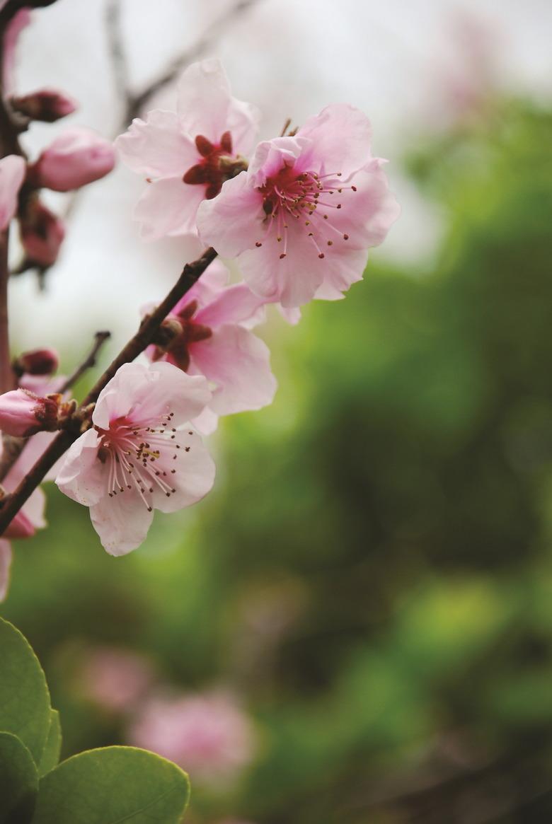 동백꽃 만발한 여수의 봄