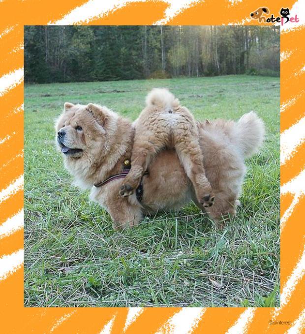 사자+곰, 합체 완료