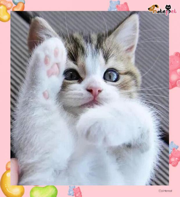 핑크 캣젤리