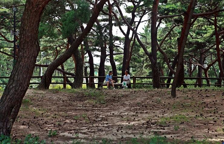 우리나라 섬 중에 소나무 숲길이 제