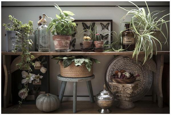 가성비 좋은 인테리어 솔루션 - 식물