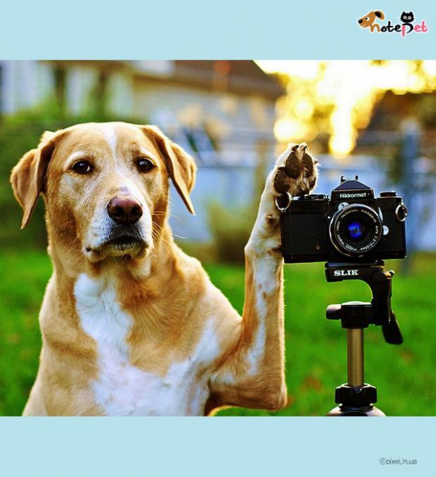 나도 사진작가