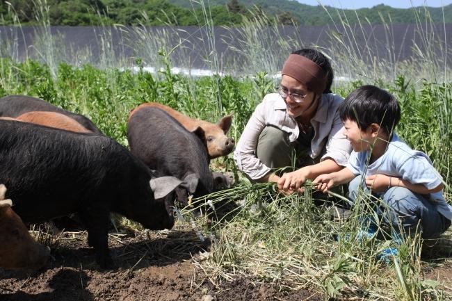 다큐멘터리 영화 '잡식가족의 딜레마' 스틸 컷. '돼지를 돼지답게' 기르는 산골 농장 원가자농에서 황윤 감독과 아들 도영이 새끼 돼지들과 놀고 있다.