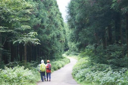 원시림 62.7㎞…걸을수록 솟는 울창