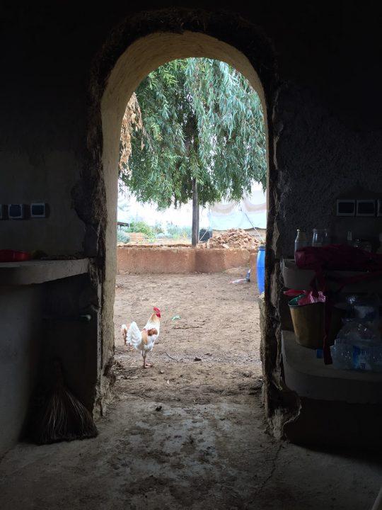 모로코 농장에서 0원으로 한 달 살기