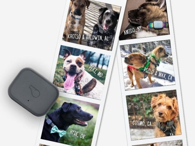 마스가 인수한 휘슬의 애완동물 웨어러블 [출처=whistle.com]