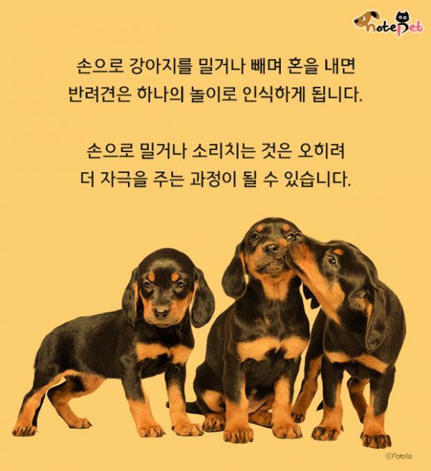 강아지가 잘근잘근 아무거나 씹어요