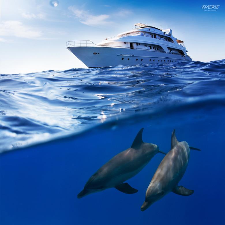 야생 돌고래를 만나다, 괌 돌핀 크루