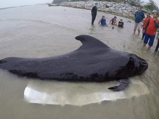 플라스틱을 삼키고 죽은 고래 이야기