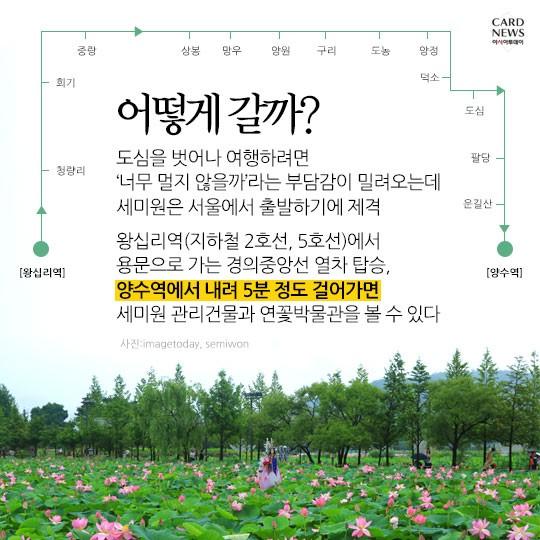 마음이 정화되는 연꽃세상~ 물과 꽃의