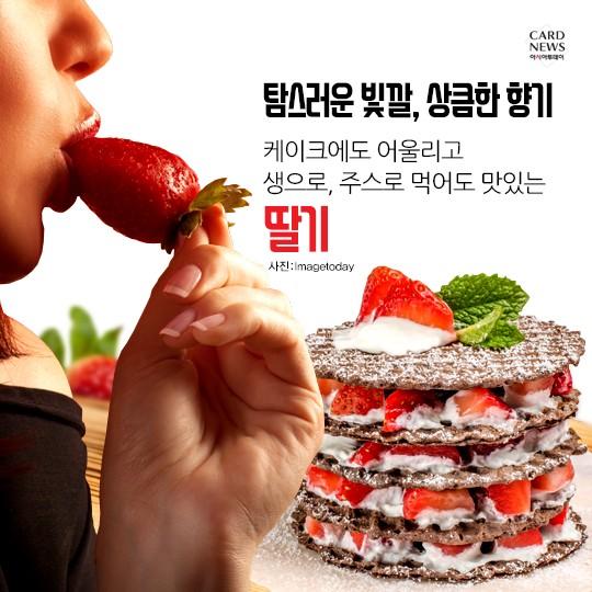 '딸기는 원래 관상용?' 군사정보 캐