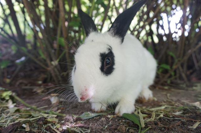 '공원'에 버려진 반려 토끼들