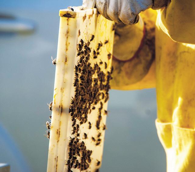 꿀벌이 지구 떠나는날, 지구는 인간을