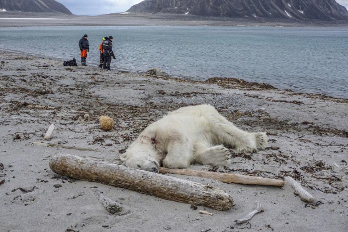 북극곰 죽음이 쏘아올린 '에코투어리즘