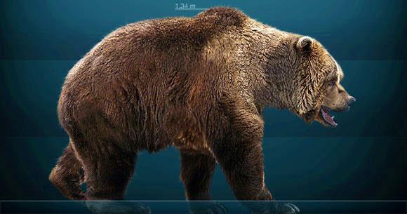 선사시대 유럽에 '초식 곰' 살았다