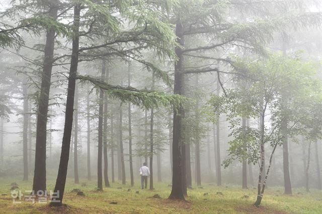 석탄트럭 멈춘 지 30년… 초록숲 하