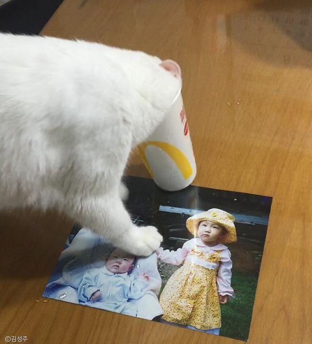 이 고양이가 얼음 먹는 방법