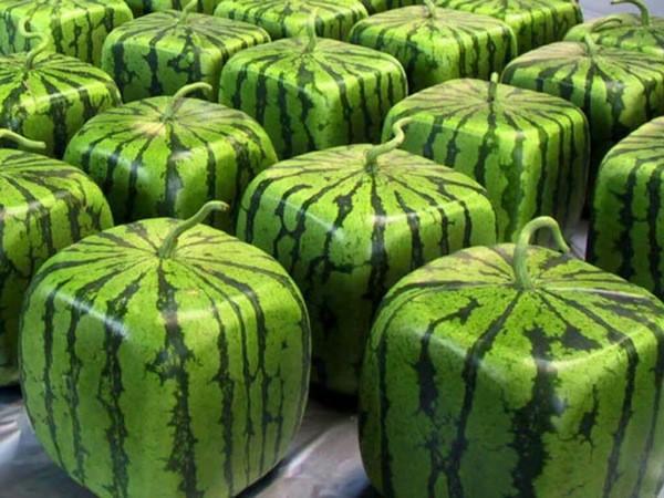 세계에서 가장 비싼 과일 10가지