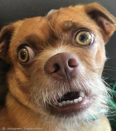 `매사 근심·걱정` 강아지?..표정만