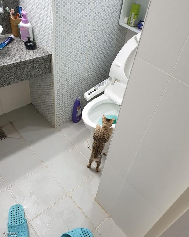 고양이 앞에서는 변기 물도 함부로 내