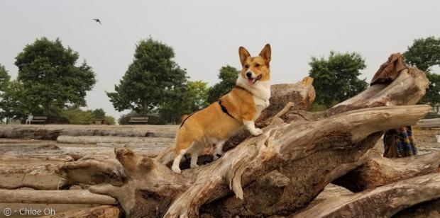'몰래 나왔는데..' 외출하다 강아지