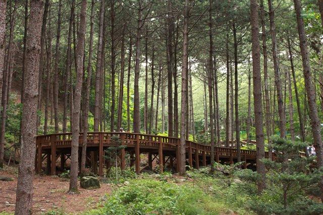 숲속에서 즐기는 힐링, 국내 자연휴양