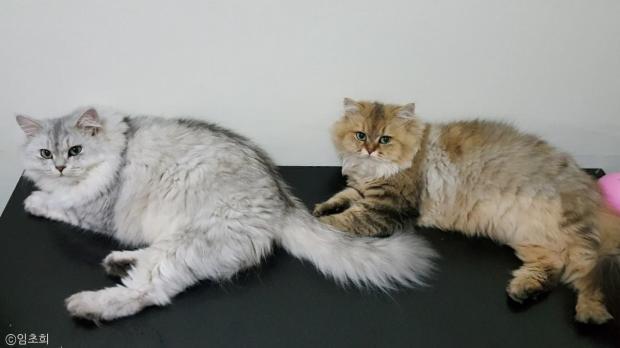 '밤껍질 서리' 하다 딱 걸린 고양이