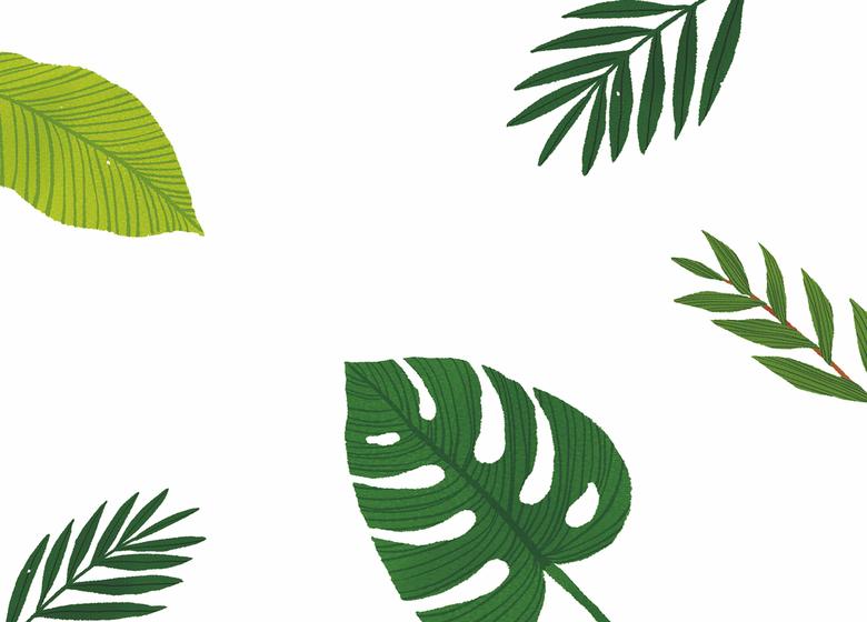 반려식물 전성시대