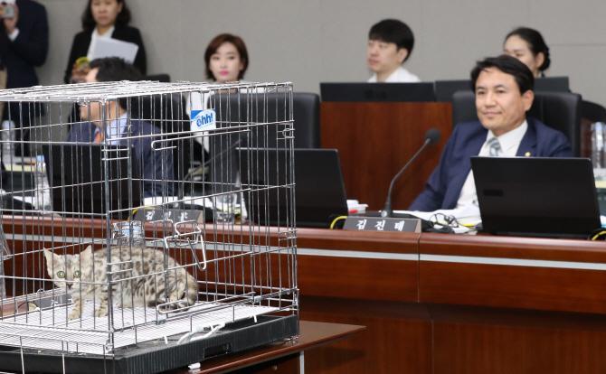 '퓨마 사살' 질타 김진태, 정작 고