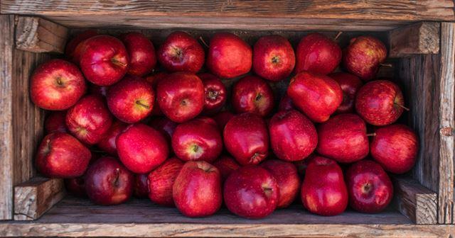 스치듯 지나가는 빨간 사과를 붙잡고