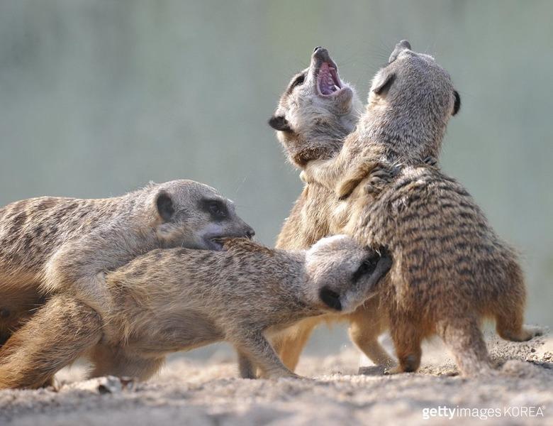 생동감 넘치는 유쾌 발랄한 동물들