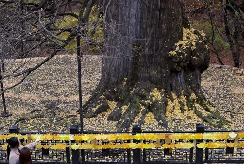 천 년 은행나무, 박문수 다리…수능