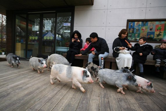 2019년 황금 돼지 기운 받으러 '