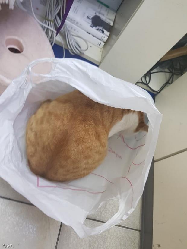 손 안 대고 고양이 수확하는 방법..