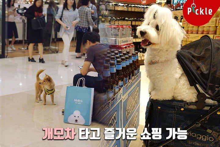현재 백화점 영업팀이 '애완견 모시기