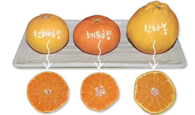 [출처=건강보험심사평가원]